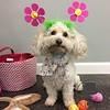 Emee loves Spring!