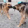 GSD playtime!
