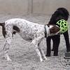 Zeus and Gita playing together