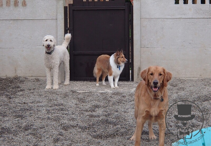 Griff, Charlie and Bailey