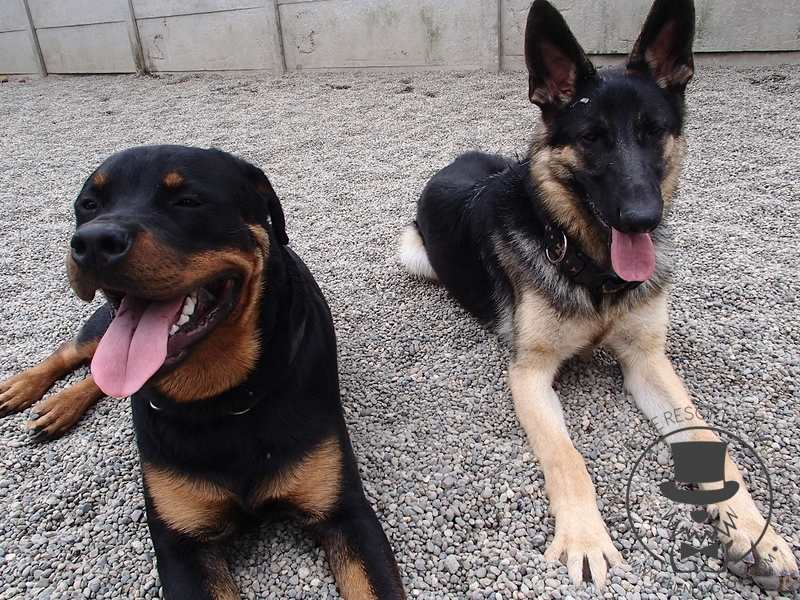 Ruger and Koda