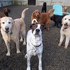 Zeus started daycare with us today!  Backed up by all his buddies!