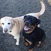 Koda and Mo