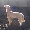 Teddy found the sunlight!