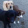 Ellie, Murphy and Bailey