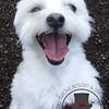 Happy pup !