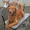 Duke is having to share his favorite spot ;)