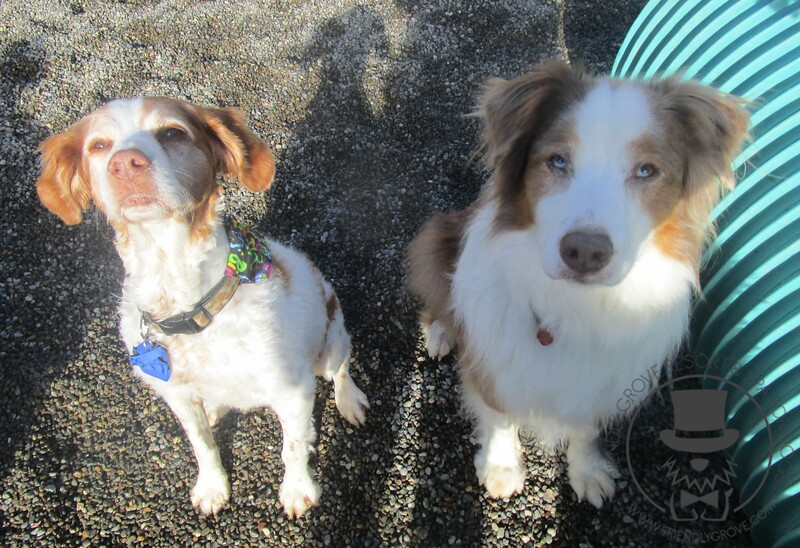 Ruger and Shakti!