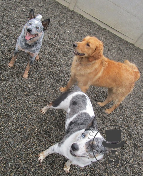 Rocco, Rusty and Bitzy hanging out