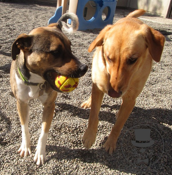 Penny offering to share her ball with Jaz :)