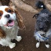 Basil and Charlie!