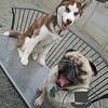 Brutus and Doug!