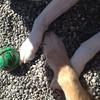 Cute paws :)