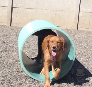 Doggy Daycare - April 2016