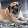 I sleepy, I love my tennis ball :)