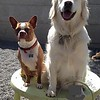 Cooper and Kula