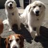 Emma, Peyton and Penny!