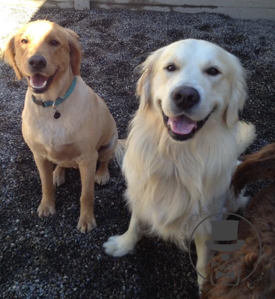 Rusty and Zeke!