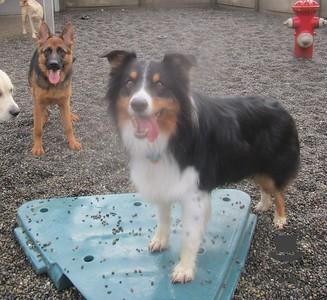 Doggy Daycare - December 2015