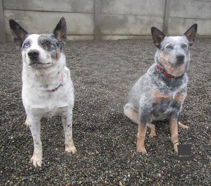 Bitz and Rocco