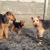Some terriers!