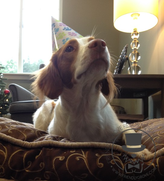 Happy birthday sweet girl!