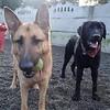 Ziva and Cody!