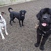Zeus, Jetta and Gus at daycare