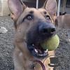 Miss Ziva loves her ball time!