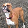 This is how a boxer smiles :D