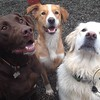Moose, Charlie and Kula