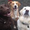 Moose, Charlie and Kula
