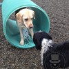 Fiona and Otis playing in the tunnel!