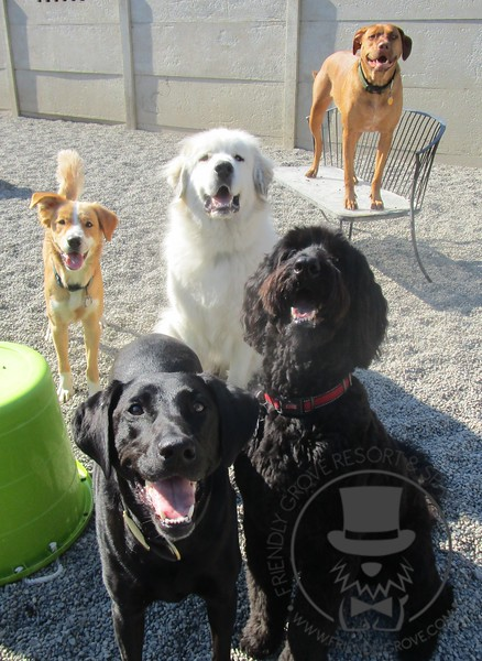 Some of the daycare group!