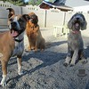 Rosie, Charlie and Dallas!
