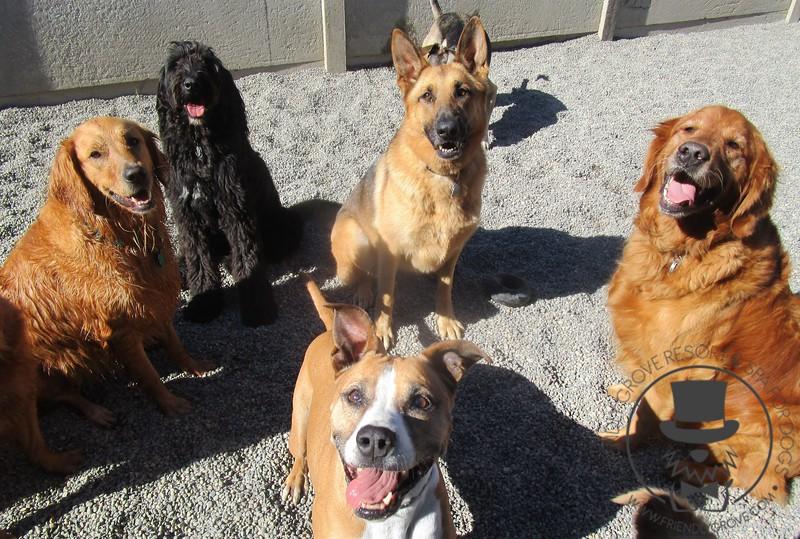 Happy pups!