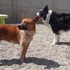 Bosco and Chowder!
