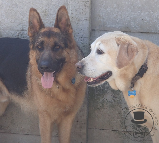 Bear and Mo hanging out in the daycare yard
