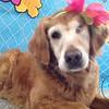 Stella in her flower bandana