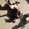 upside down Sadie