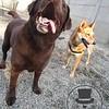 Izzy and Cheyenne