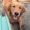 Sweet pup!