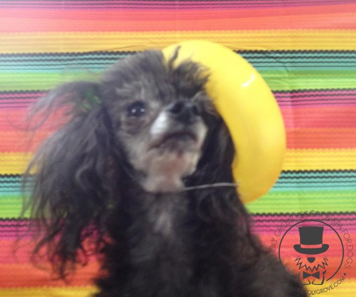 Annie is rocking her sombrero