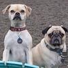 Zoe and Doug the Pug