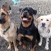 Sophie, Koda and George