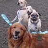 Charlie, Zoe, Doug and Teddy !