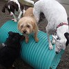 How many dogs can you fit on top of a tube?