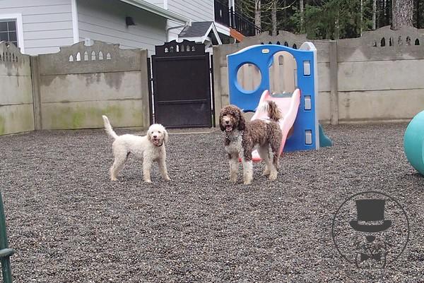 Doggy Daycare - November 2014
