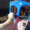 Isaac looking at Tugg through the peep hole :)