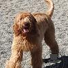 Rory running around the play yard!